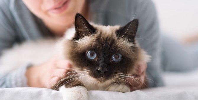 猫のげっぷが出る理由と注意点