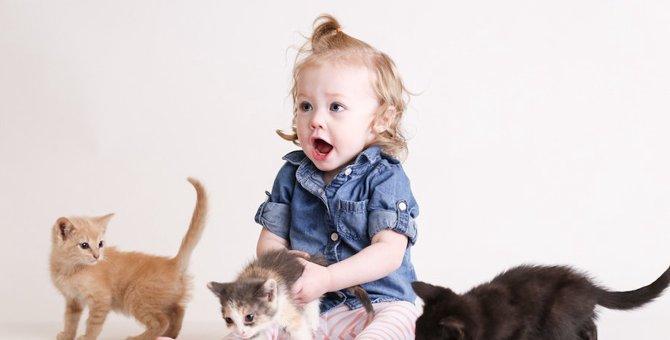 猫は人間でいうと何歳ぐらいの知能がある?