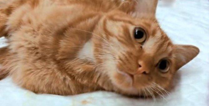 腰の皮と尻尾を咬みちぎられた猫…危機を乗り越え幸せに!