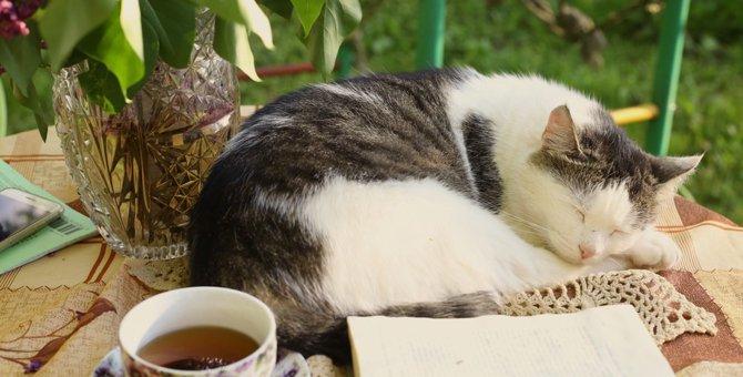 猫は紅茶を飲んで大丈夫?成分とその影響
