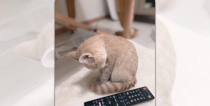 キャー!可愛すぎ♡ちっちゃな子猫さんの『ごめん寝』に悶絶必至!