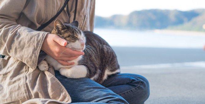 猫が飼い主にしている『気遣い』7選