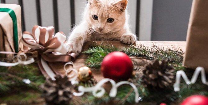 猫が『机の上から物を落とす』心理4つ