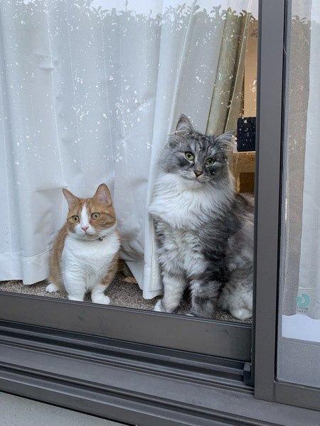 猫は毛の長さによって性格や行動が違うってほんと?