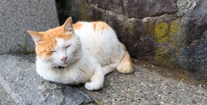 猫返し神社の歴史と参拝時のおすすめポイント!
