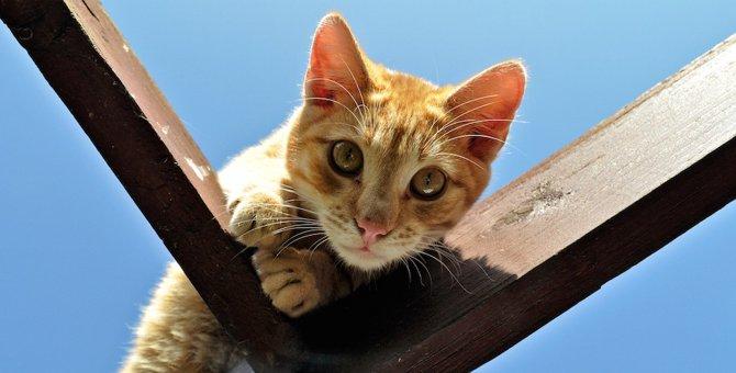 猫がいつもと違う場所にいる5つの理由