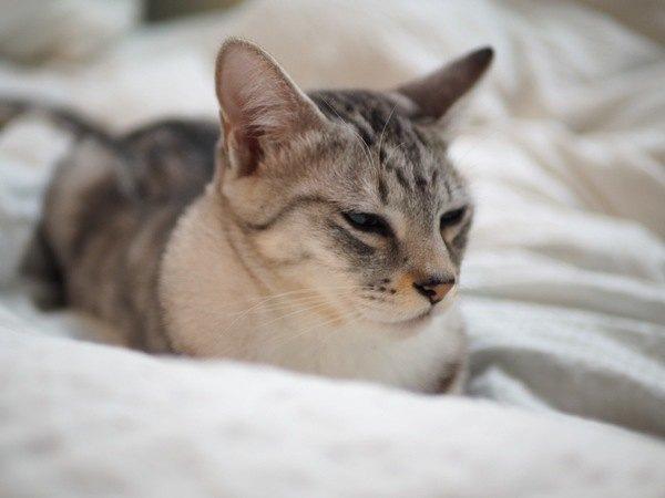 猫をおびき寄せる?一緒に寝るためにすべき5ステップ