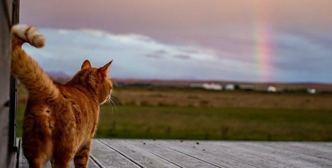 死んだ猫が行きつく場所「虹の橋」とは?