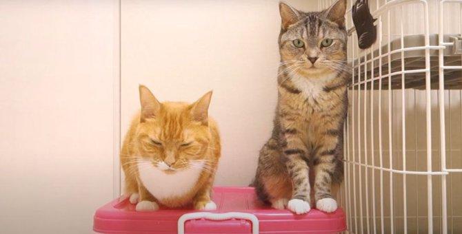 姉妹仲良くちょこんと座る猫ちゃんが可愛い♪