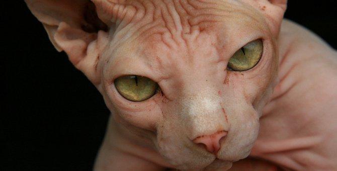 『捨てられたと誤解した猫』がみせる仕草・行動5つ