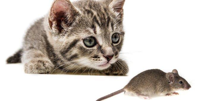 猫が狩りをする理由とおみやげの意味