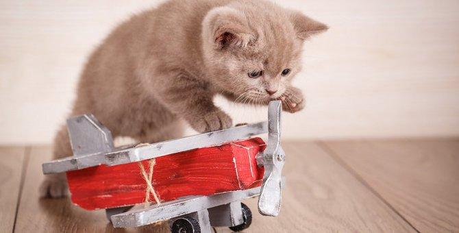 猫と海外に行く時に準備しておく6つのこと