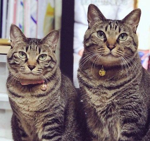 猫も家族も嬉しい!無理なく続けられるグレインフリーのキャットフード