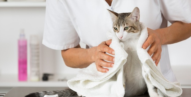 猫におすすめのドライシャンプー!人気商品5選