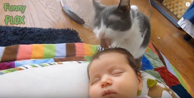 赤ちゃんをお世話する猫たち大集合★せっせと舐める姿にほっこり