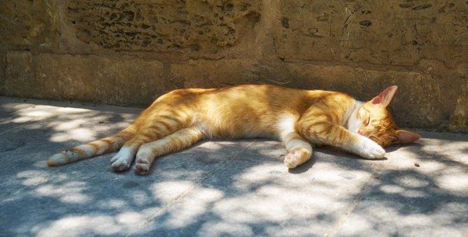 猫が暑いと思っている時の6つのサイン
