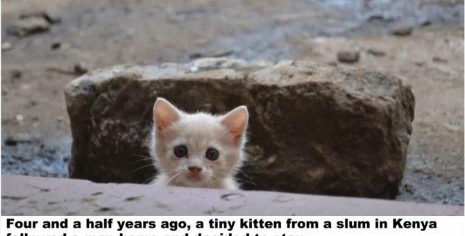 スラム街に住んでいた子猫は、助けてくれた男性の後を追った...