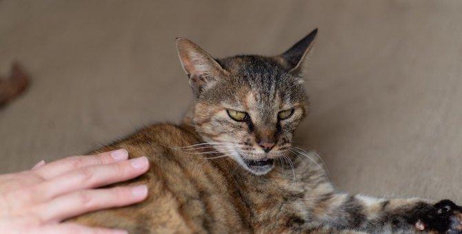 ついやってない?猫が『イライラする』触り方4つ