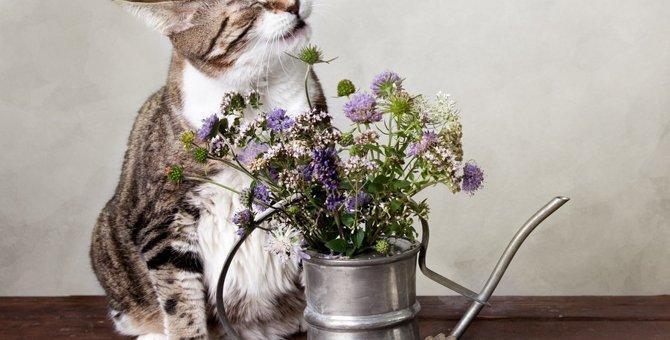 猫がくしゃみをする原因とその対策