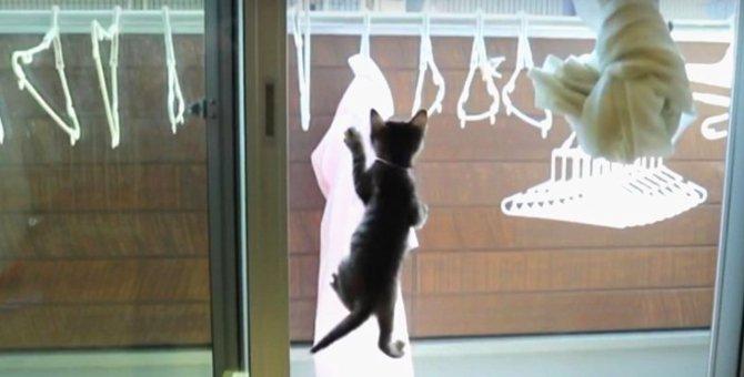 猫ちゃん限界にチャレンジ!ひたすら登るべし…!