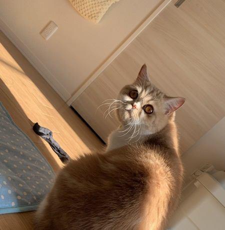 猫が飼い主の持ち物を隠す理由5つ