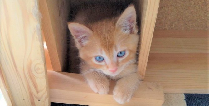 生後たった7日で迎えた初めての保護子猫。たった1ヵ月で驚きの成長!