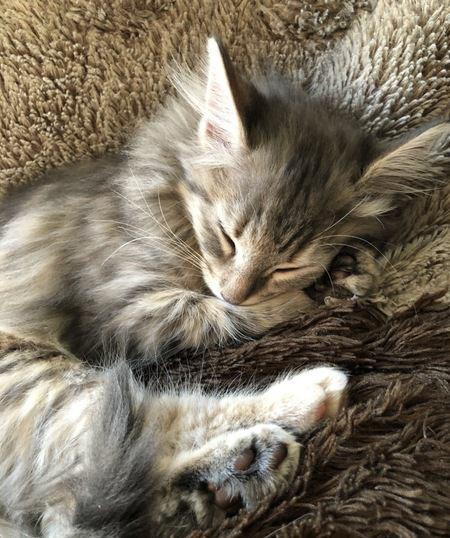 猫は飼い主と一緒に眠る事を嬉しく思うの?