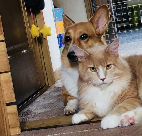 猫がしつけを覚えない理由とは?なぜの犬ように覚えないの?