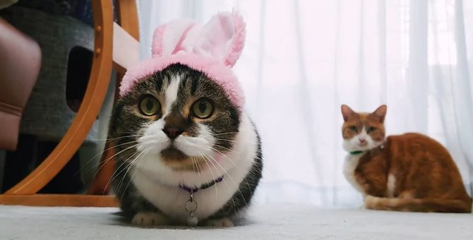 ぴょんぴょん!ボールを追いかけるうさぎに変身した猫さん♡