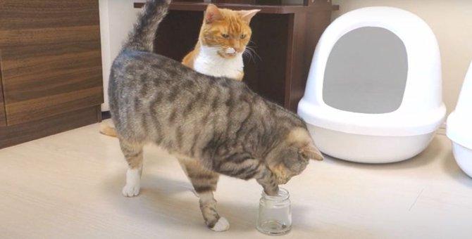 プリンの空き瓶で争い勃発?!不器用な猫ちゃんの強引な作戦!