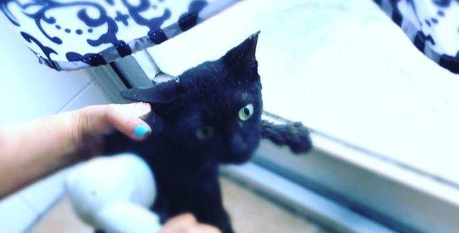 テトラポットで暮らす臆病な黒猫をレスキュー。深い傷を癒して幸せ探し