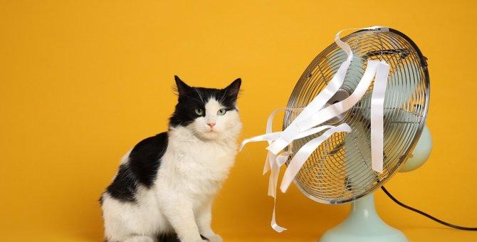 猫のいる部屋で『扇風機』を使うときに注意すべきこと4つ