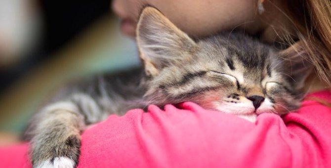 子猫を保護したらどうすればいい?注意点やすべきことを解説