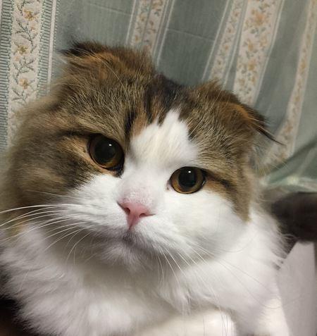 冬の『猫のノミ対策』はやらなくても大丈夫?