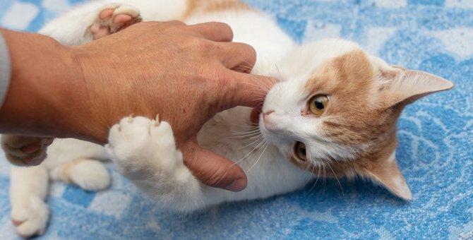 愛猫が飼い主に噛みつく時にチェックすべきこと5つ