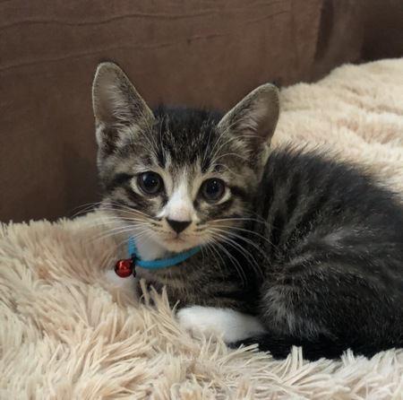 引っ越しや出産で住居環境に変化が!猫に対する気配り4つ