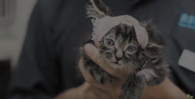 壁の隙間に挟まり1週間…頭だけでぶら下がっていた子猫のレスキュー