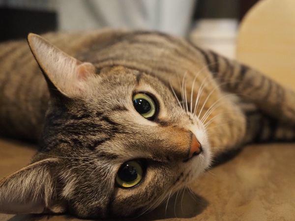 実は脈あり?猫の分かりにくい愛情表現5つ