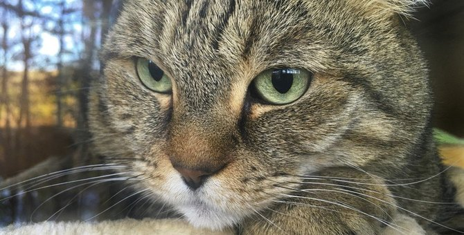 猫が憂鬱に感じる6つの事