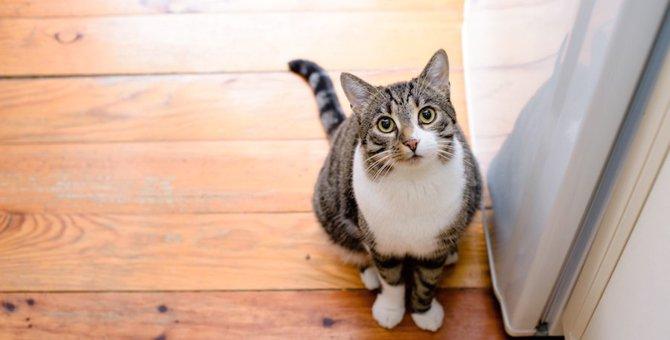 猫をお留守番させる前に確認するべき11の事