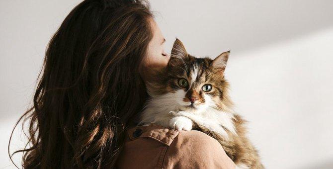 猫が『髪の毛』を噛む・舐める4つの理由と対策