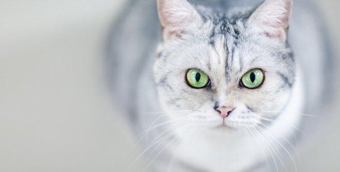 【猫にはお見通し】ネコが知っている5つの事