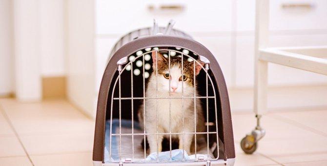 家族旅行に行くときに猫はどうする?留守番、ホテル、シッターそれぞれのメリットやデメリット