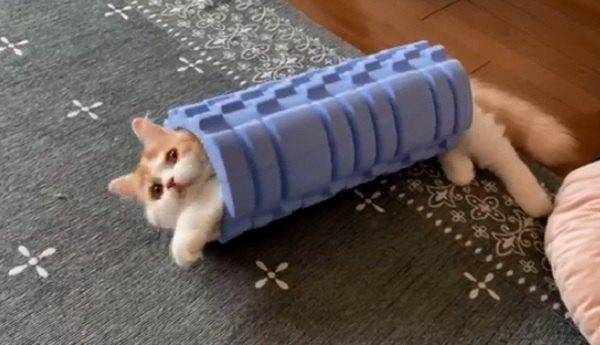 ニャンとも可愛い「猫ロール」でもここから出られる?とネット民騒然