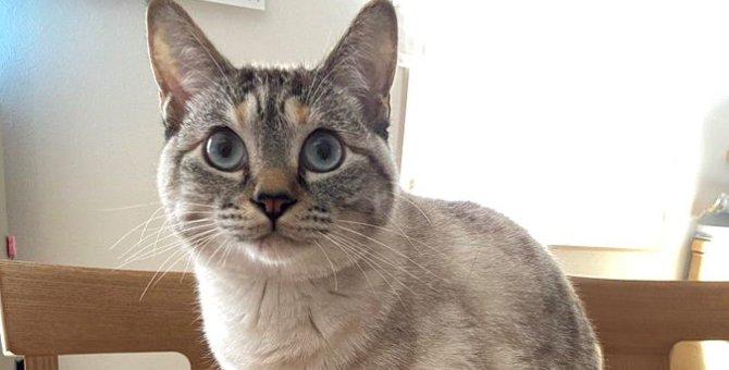 いくらなんでもそれは…!箱にinしたい猫さんが話題♡