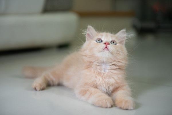 猫とビームが出るおもちゃで遊ぼう!注意点やおすすめ商品