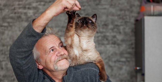 猫の『老化』進めてしまう飼い主のNG行動3つ