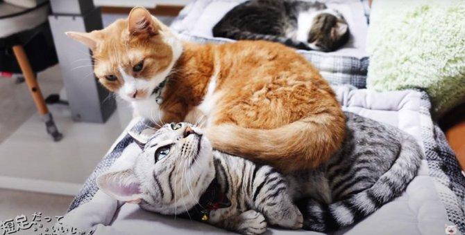 困ったニャ〜。先輩猫さんに乗られてしまった子猫ちゃん!
