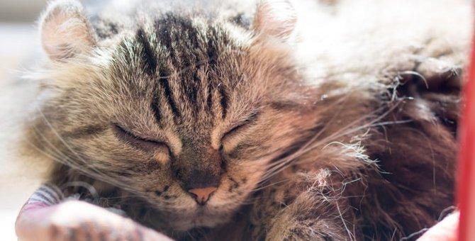 【猫にまつわる迷信】猫は死期が近づくと居なくなるって本当?