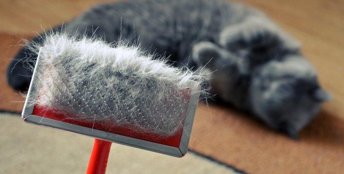 『抜け毛対策』が必要な猫の品種4選